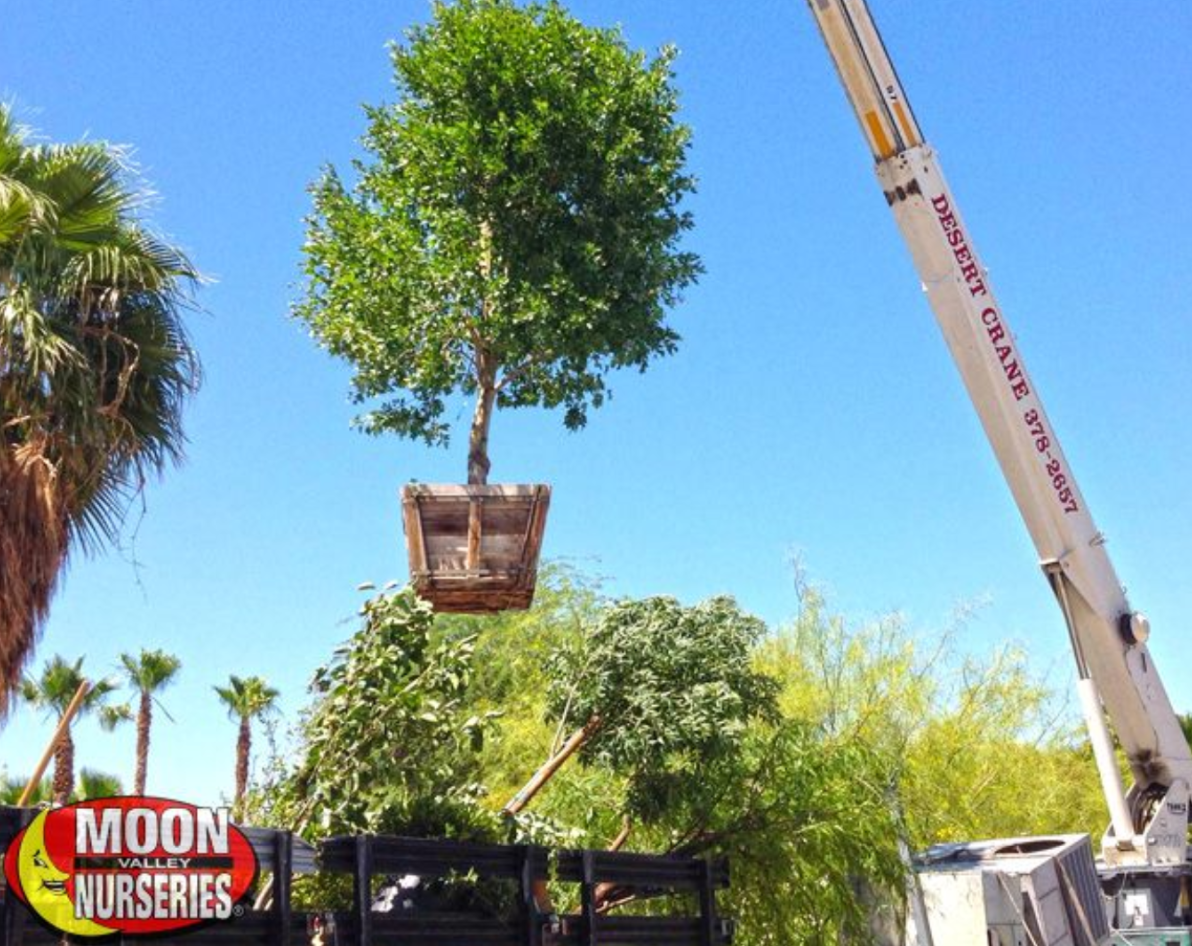 Is Your Yard Prepared For Spring Las Vegas Real Estate Blog